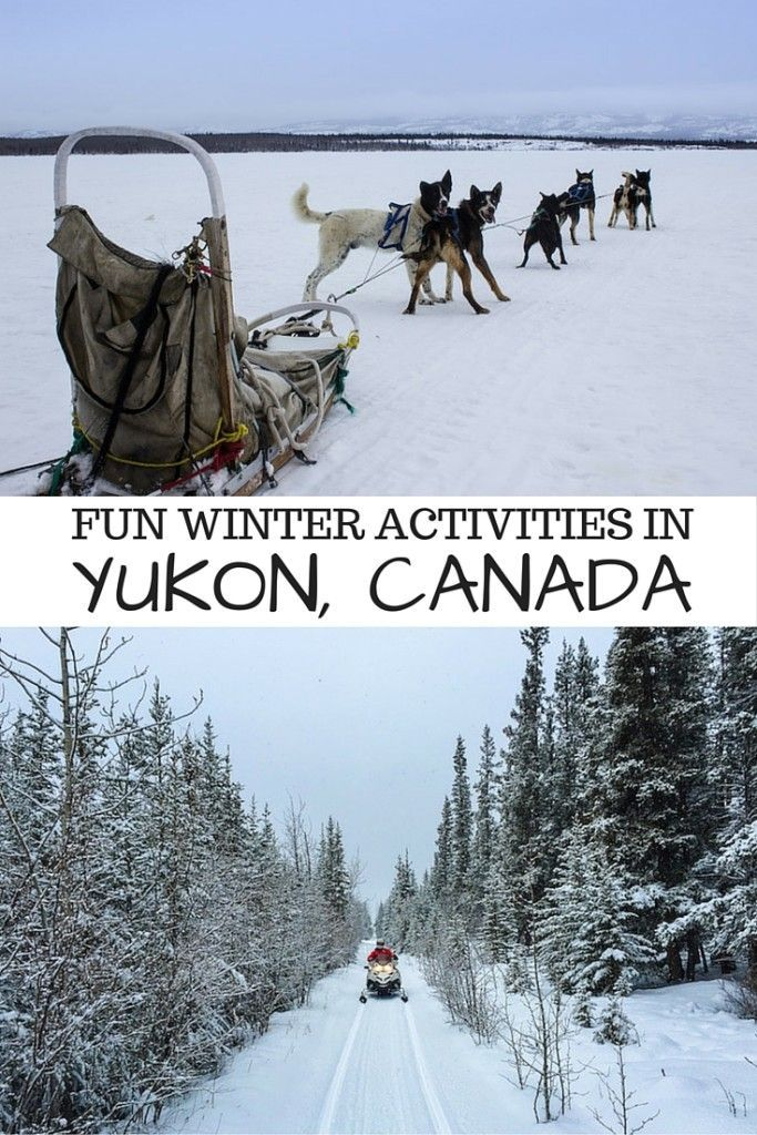 Fun winter activities in Yukon, Canada, including dog sledding, snowmobiling and northern lights viewing!