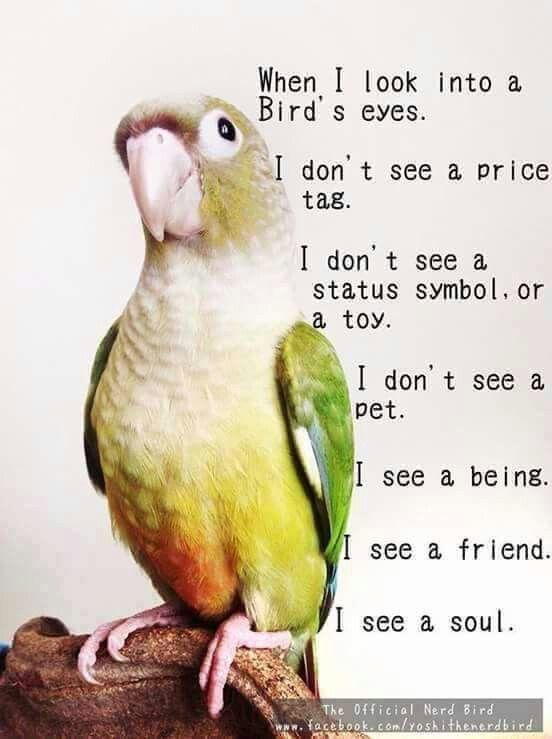 So true. Looks like my lil Phoenix, too!