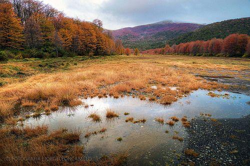 El otoño esta aqui - P.N. Puyehue (Patagonia - Chile)