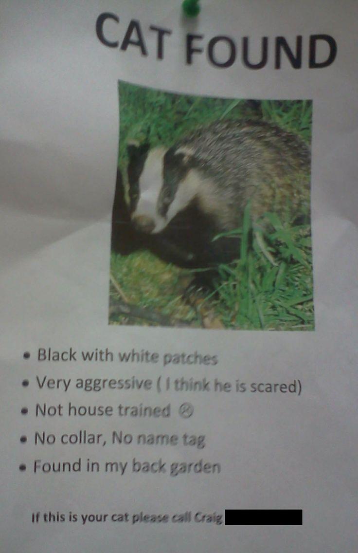 144 best honey badger images on pinterest honey badger funny