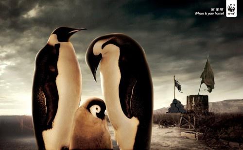 WWF6.jpg