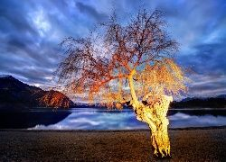Drzewo, Jezioro, Wanaka, Nowa Zelandia