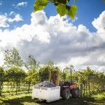 Canberra District Wineries celebrate harvest with 10 days of events