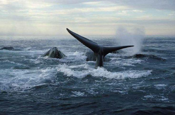 Go Whale WATCHING! Nova Scotia