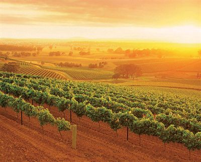 The Hunter Valley, AUSTRALIA.  Hunter Valley Semillon is widely considered the iconic wine of the region but the Hunter produces wine from a wide variety of grapes including Shiraz, Chardonnay, Cabernet Sauvignon and Verdelho.