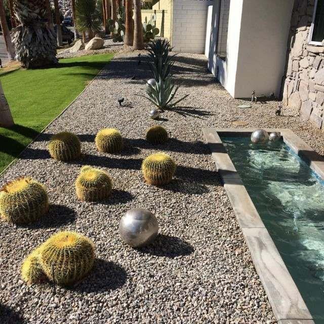 Les 28 Meilleures Images Du Tableau Cactus Et Jardin Sec