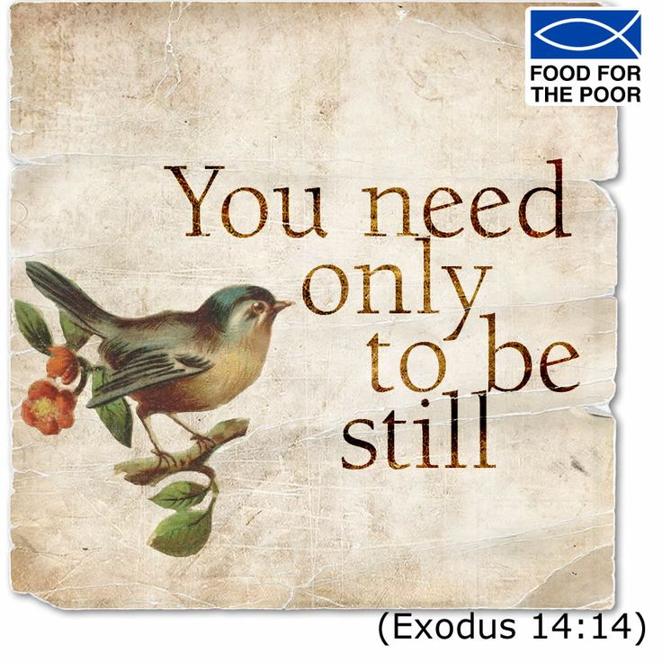 You need only to be still. (Exodus 14:14) Receive inspiration delivered to your inbox Monday - Friday:  http://www.foodforthepoor.org/verse #inspiration #verseoftheday #bibleverse #bible #prayer #prayeroftheday #foodforthepoor
