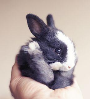 O fotógrafo Ashraful Arefin é apaixonado por coelhos e produziu álbuns de bebê que vão te fazer vomitar arco-íris!