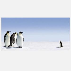 Magnettafel Pinguine jetzt auf Fab.