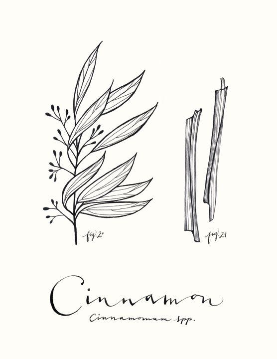 Cinnamon 8.5x11 Culinary Art Collection by evajuliet on Etsy