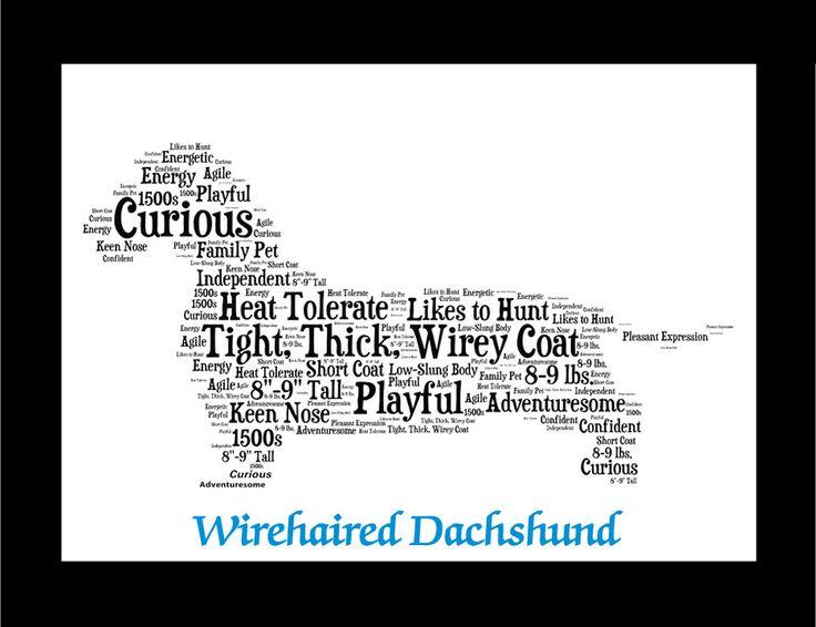 Wirehaired Dachshund