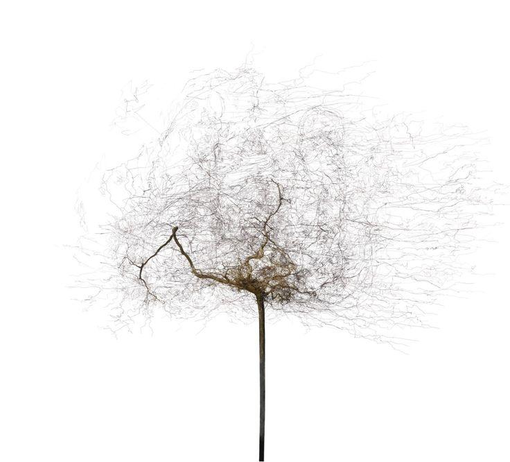 Bertrand Flachot(French, b.1955)  Arborescence#2    2012  Tirage jet d'encre (Fine Art)