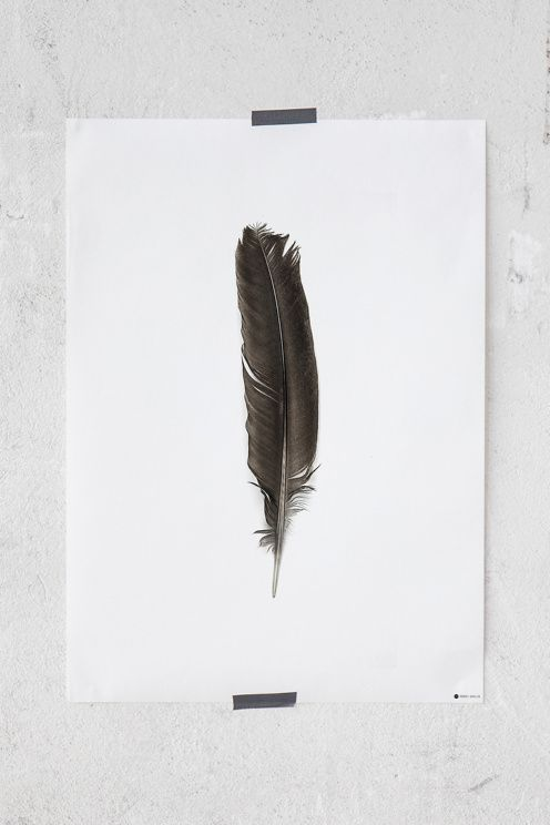 Rebel Walls Poster Lost Feather 50x70 cm