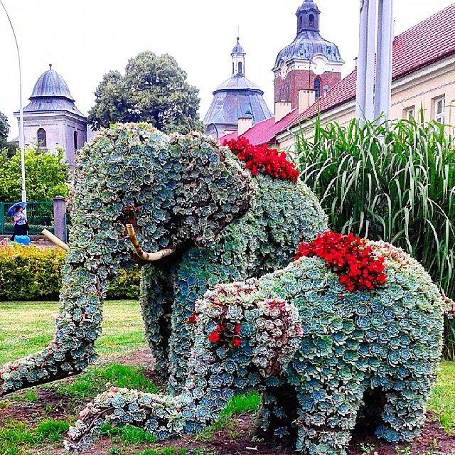 #elephants #green #poland #przeworsk #słonie#rośliny #zieleń