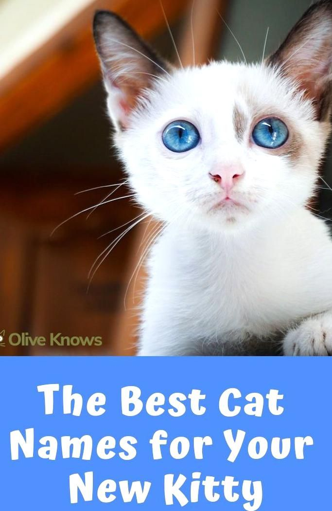 In This Article Well Be Running Through Some Of Our Favorite Cat Names Some Quirky Some Traditional And Some Taken From In 2020 Cat Names Funny Cat Names Kitten Names