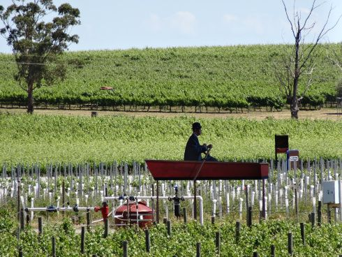 A boat in the vineyards? Viewable from a jetty? Only at Wirra Wirra, McLaren Vale!
