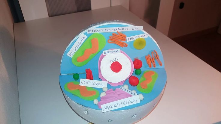Maqueta de una célula animal con la explicación de sus partes // Proyect...