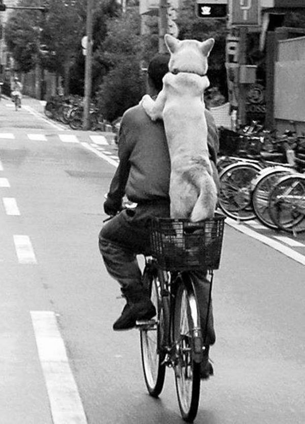 Hitchin a Ride~♛