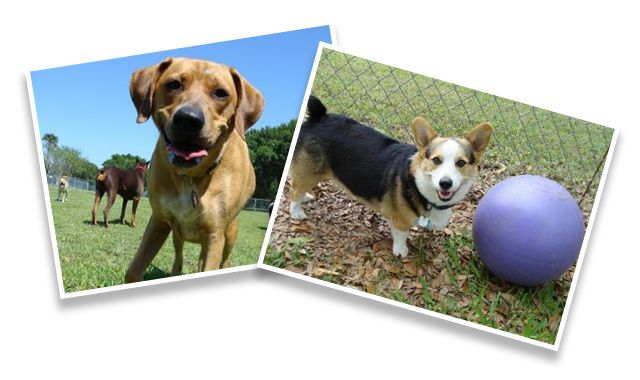 Paradise Luxury Dog Resort In Palm Bay Fl And Paradise Playcare In Melbourne Florida Luxury Dog Palm Bay Melbourne Florida