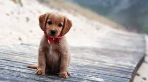 Image result for cute puppy backgrounds