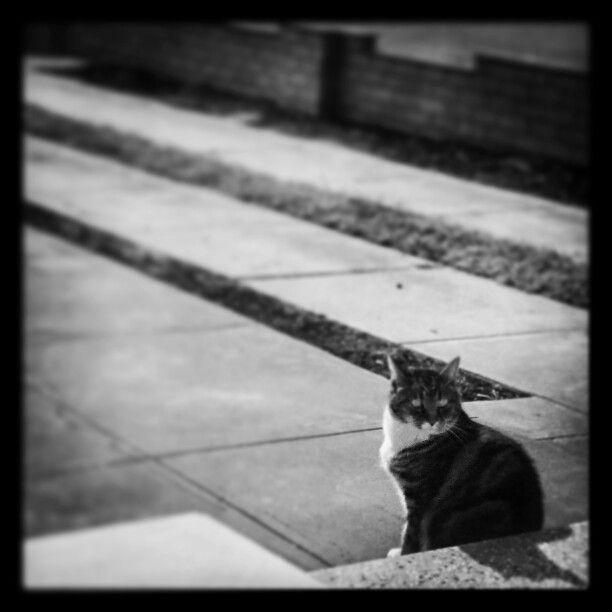 Thomas the cat.  Last days of autumn.