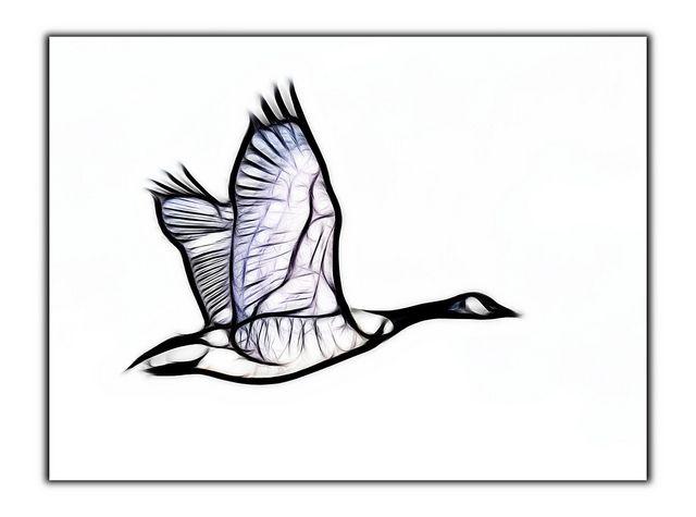 goose logo - Google Search                                                                                                                                                     More