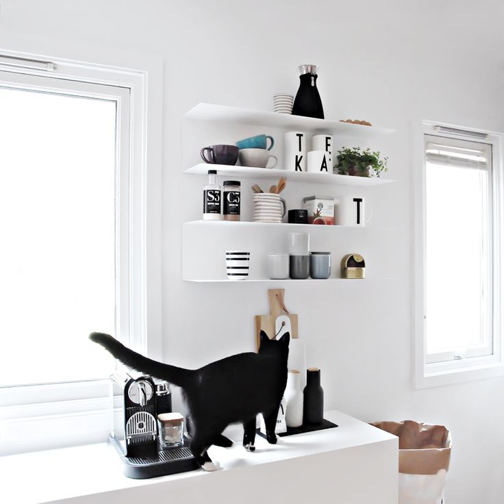 Beautiful white kitchen. Hate when owners let cats on the kitchen counter, when it's so easy to train them not to. It's so unhygienic.