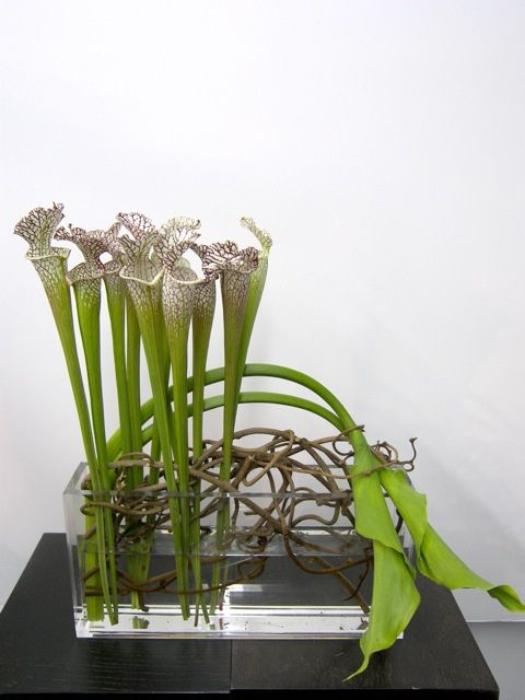 Pitcher plant display, w/ branches in clear vessel