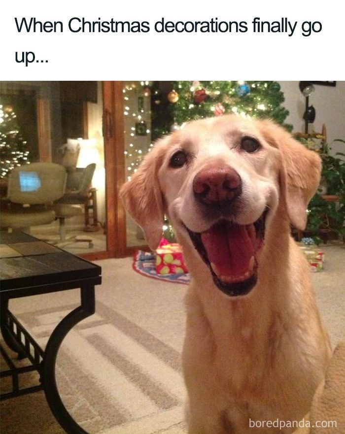 50 Hilarious Christmas Memes Christmas Memes Funny Funny Merry Christmas Memes Merry Christmas Meme
