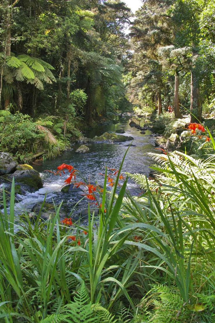 A walkaway along the Hatea River, starting by Whangarei Falls, Northland, NZ