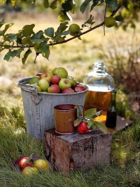 Love the feel of this rustic fall moment. Cider making time!