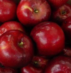 Jon-a-red dwarf apple tree, self-pollinating