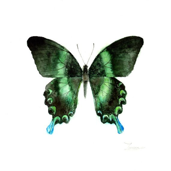 Watercolor green butterfly Papilio blumei. JPG downable and printable. Aquarelle realistic hand painting high resolution digital file by ZorrinaArt