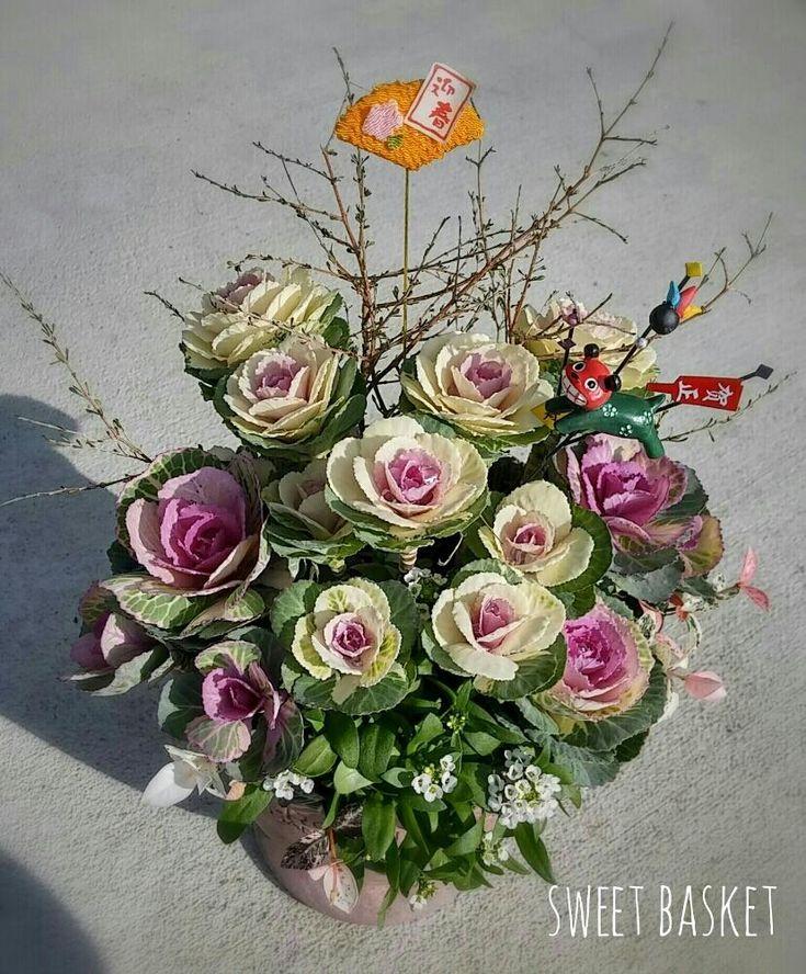 『我が家の玄関、お正月らしいのは、この葉ボタンの寄せ植えだけ(^^;💦    獅子舞と迎春ピックをさして、1枚くらいコンテストに投稿しておきましょq(^-^q)💡』sweetbasketさんが投稿したハツユキカズラ,アリッサム,ハボタン,コプロスマ ピンクステム,『お正月飾り』コンテスト,寄せ植え,ハボタン可愛いすぎ~,お正月 2017,白い花,ハボタン中毒の画像です。 (2017月1月2日)
