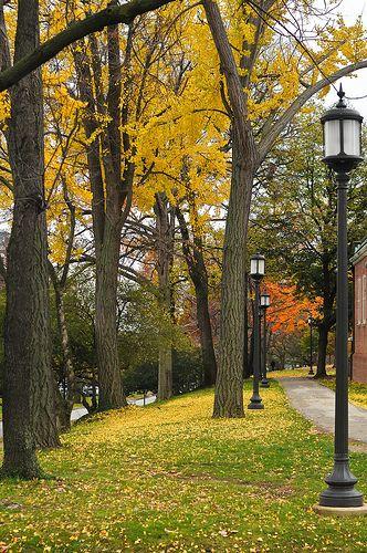 autumn, Johns Hopkins University, Baltimore, Maryland