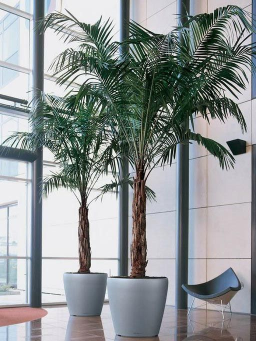 Good Office Plants For Sale Part - 12: Providing A Range Of Indoor Plants Including Indoor Office Plants And Indoor  House Plants For Sale