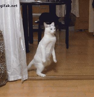 Look at me, i'm a hooman hurr durr. - Imgur