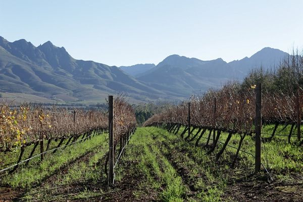 Cape Town Winelands