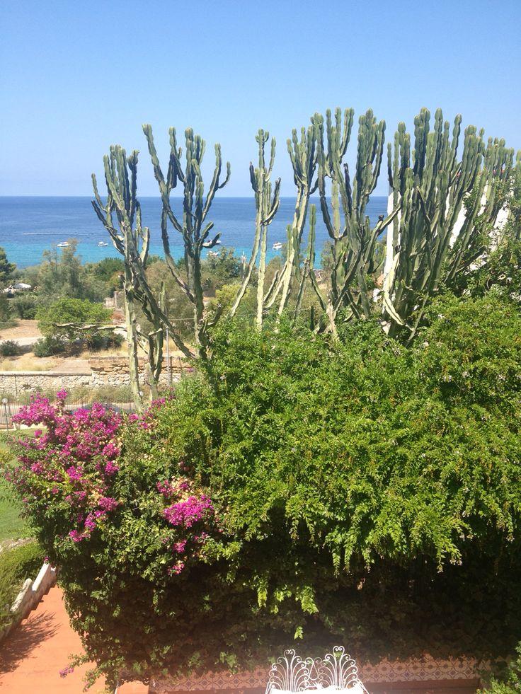 Cactus e bouganville. Più mediterraneo di così... :)