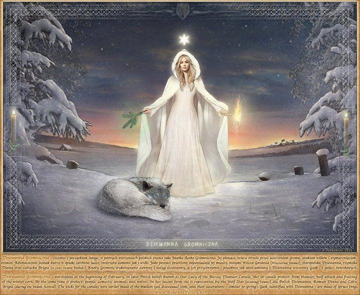 Dziewanna Gromniczna. Jej płonąca świeca strzeże przed uderzeniem gromu, atakiem wilków i wymarznięciem ozimin. Równocześnie jednak bierze w opiekę zarówno ludzi, zwierzęta domowe jak i wilki. Jako postaci świetlistej odpowiadają jej między innymi Wilcza Gwiazda (Wieczorna Wenus), staropolska Dziewanna, rzymska Diana oraz celtycka Brigid (w czas święta Imbolc). Knoty Gromnic wykonywano dawniej z łodyg dziewanny, a ich przystrojenie - podobnie jak utożsamiany z nia wiosenny Gaik świerkowy