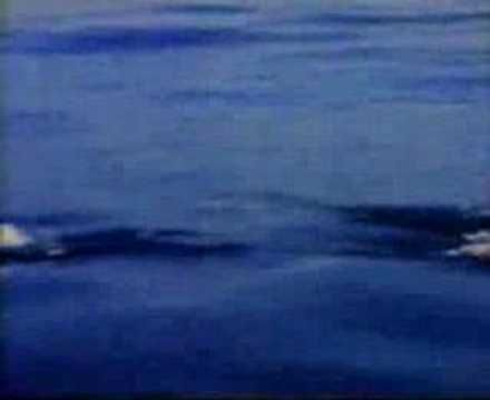 John Denver - Calypso. Only John Denver could get away with yodeling in a song about Jacques Cousteau.
