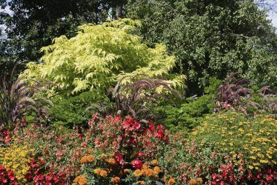 Elderberry Plant Companions: Tips On Planting With Elderberries - Gardeners love elderberries because they attract pollinators, like butterflies and bees, and provide food for wildlife. These shrubs can be planted alone but look best with elderberry plant companions. What to plant with elderberries? This article will help.
