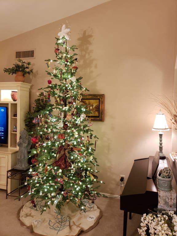 Alpine Balsam Fir Christmas Tree Balsam Hill Balsam Fir Christmas Tree Fir Christmas Tree Balsam Hill Christmas Tree