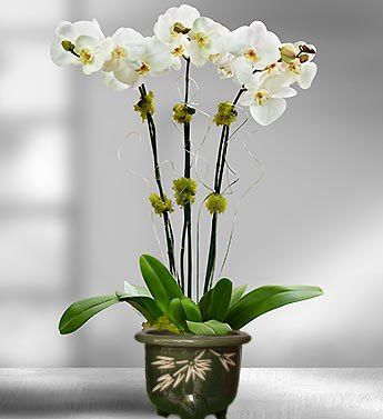 Toko Bunga Meja Anggrek Ucapan Selamat Yang Berada Di Daerah Marga Tabanan Bali www.koontown.com/toko-bunga-meja-anggrek-ucapan-selamat-yang-berada-di-daerah-marga-tabanan-bali