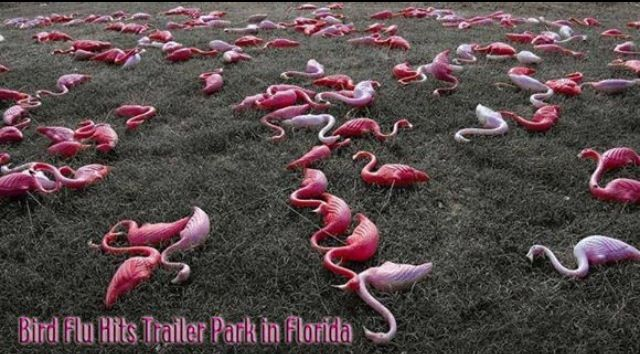 44 best images about Flamingo Funny on Pinterest | Pearl ... - photo#49