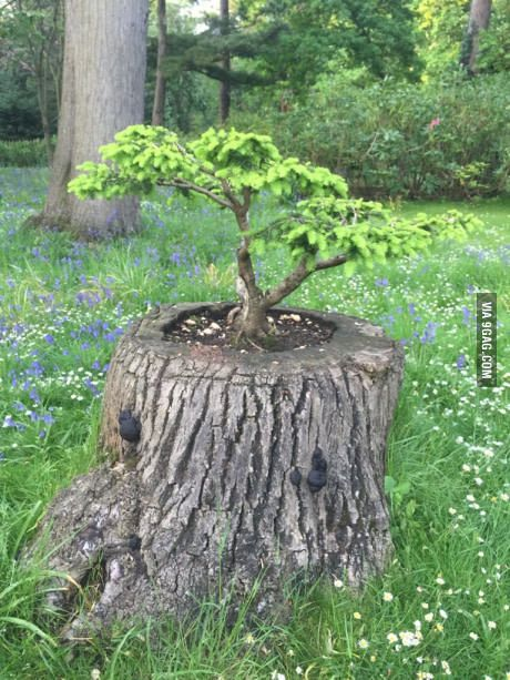 17 best ideas about tree trunks on pinterest tree trunk table tree coffee table and tree - Flowers that grow on tree trunks ...