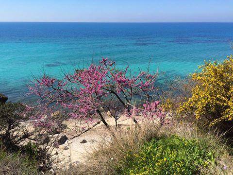 A beach close to Aghios Nikitas yesterday #lefkadaslowguide #lefkadazin #lefkada #lefkas #ionian #nature #spring #beauty #sea