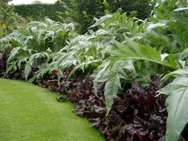Artichokes and chardEdible Garden, Beautiful Combos, Garden Borders, Edible Borders, Plants Combinations, Gardens Border, Border Design, Beautiful Edible, Chard Beautiful