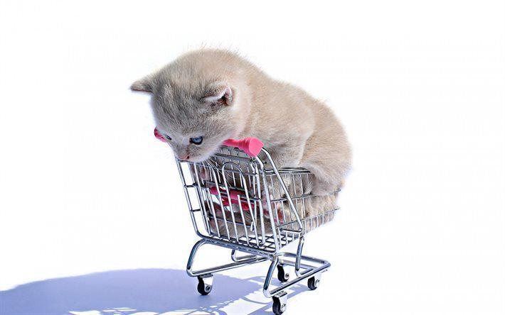 Herunterladen hintergrundbild kätzchen, niedliche tiere, graue kätzchen, warenkorb, kleine katze