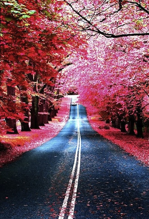 what a road!!! :)